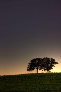 1081137_trees_at_dusk