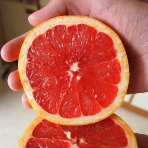 red_grapefruit_1